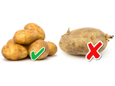khoai tây mọc mầm có ăn được không