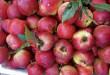 7 loại trái cây Trung Quốc đang bày bán ở chợ Việt